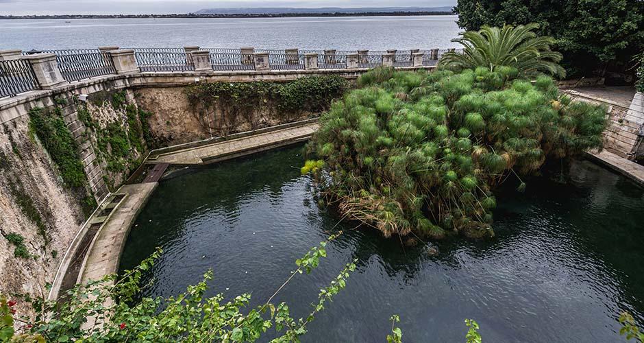 La fonte Arethusa di Siracusa vista dall'alto con al centro i papiri